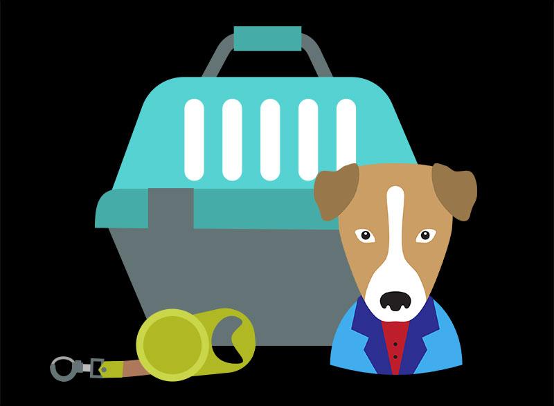 puppyt boarding